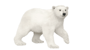 Stride Polar Bear
